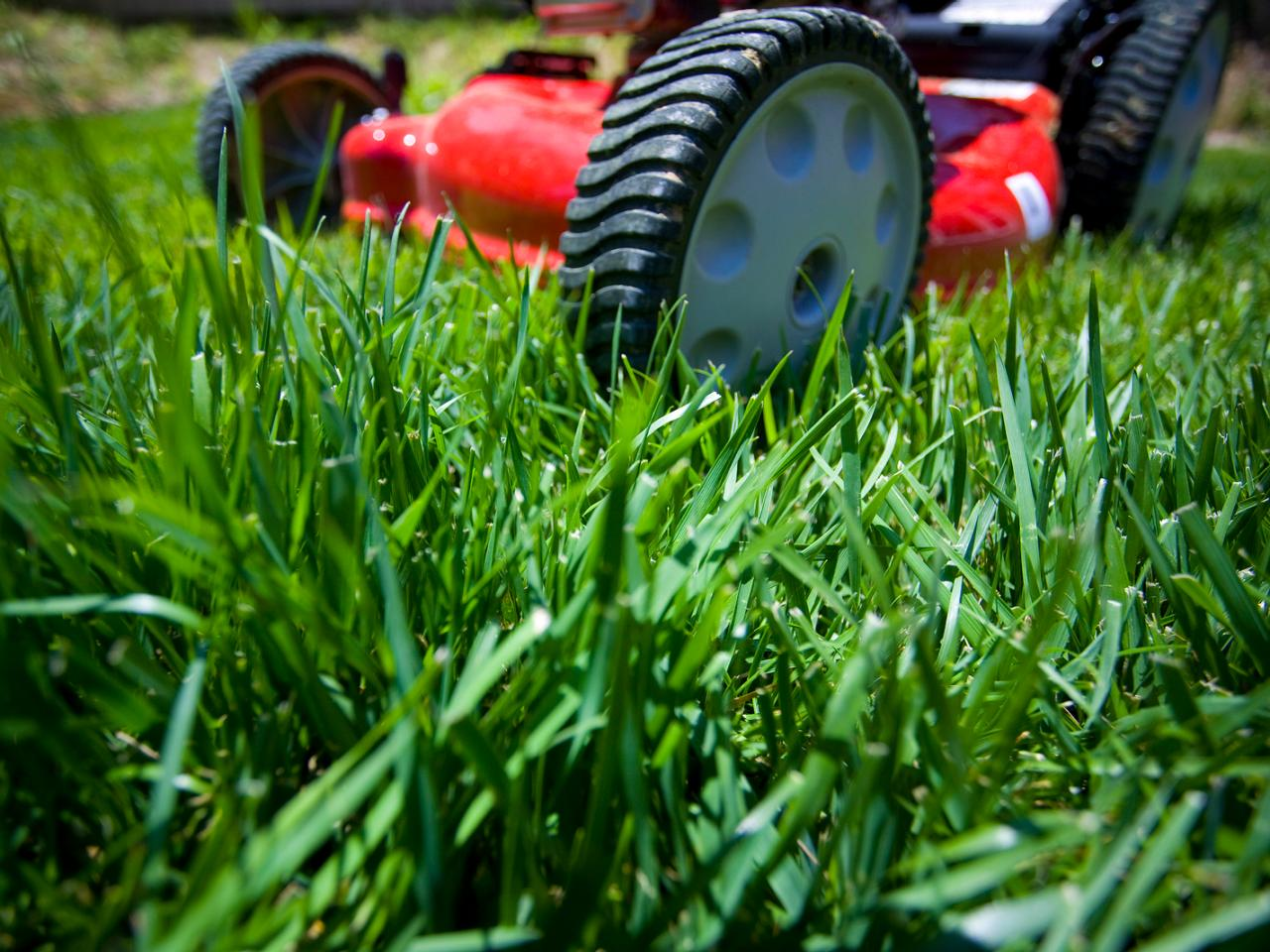 Lawn Mower-Grass